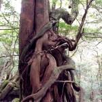 生と死の混ざり合う、屋久島の森で。
